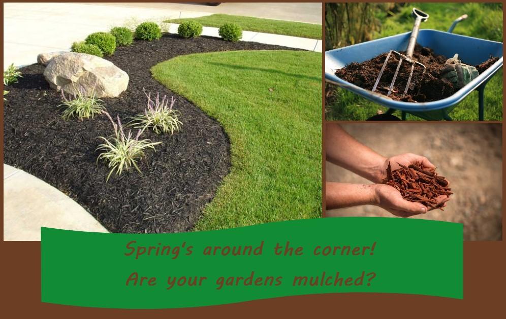 Reason for mulching your garden