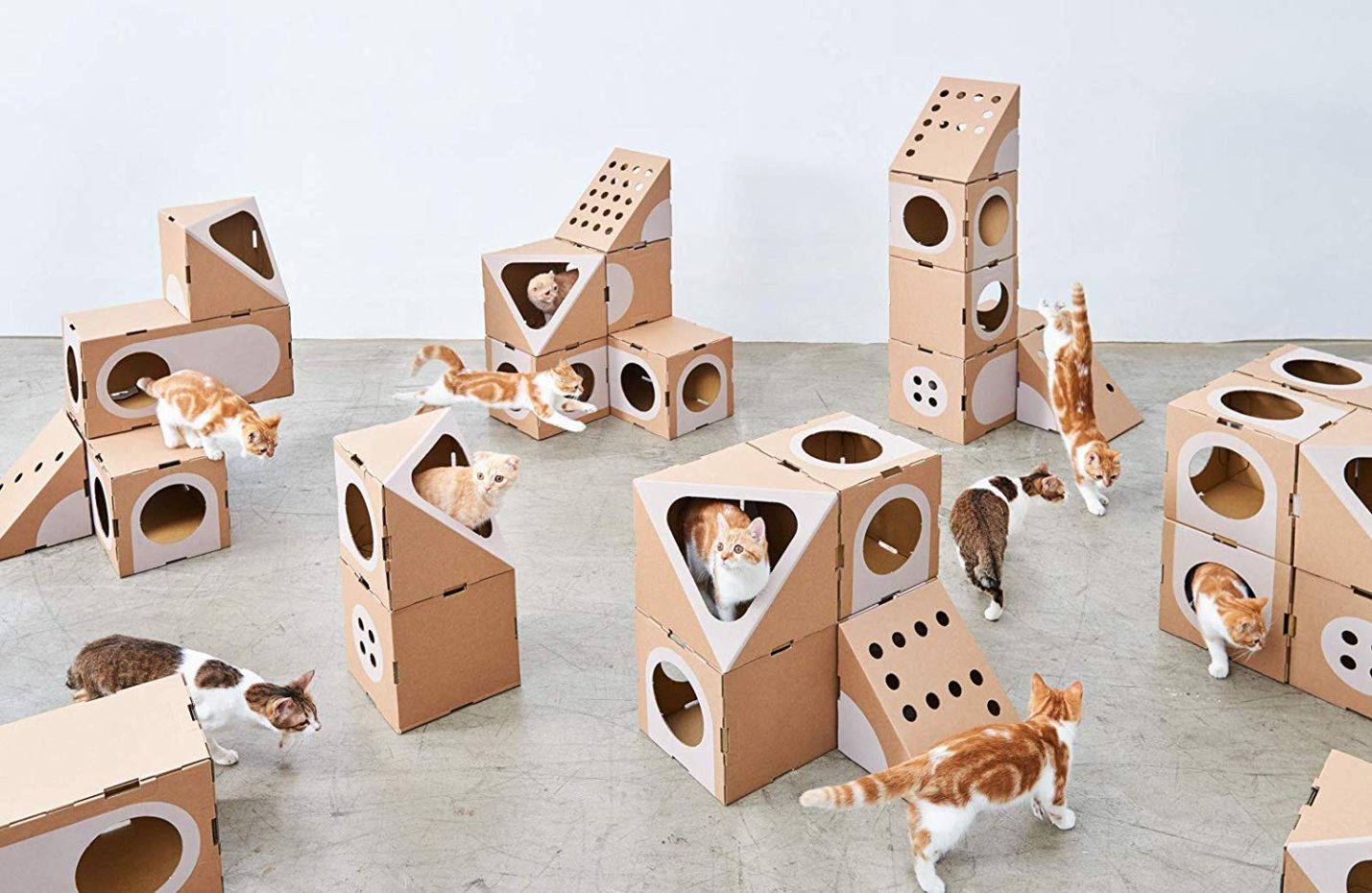 Here's Why Your Cat Loves Cardboard Boxes More Than You