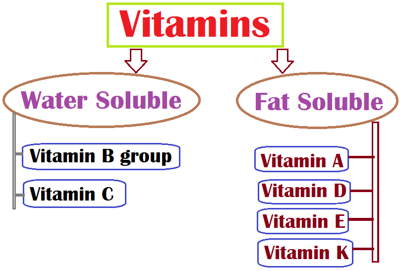 What are vitamins? Water Soluble vs. Fat Soluble Vitamins