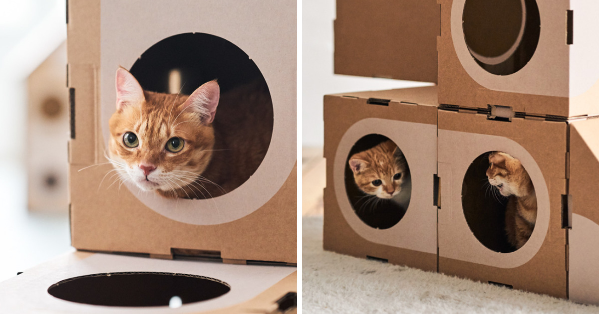 Here's Why Your Cat Loves Cardboard Boxes More Than You!