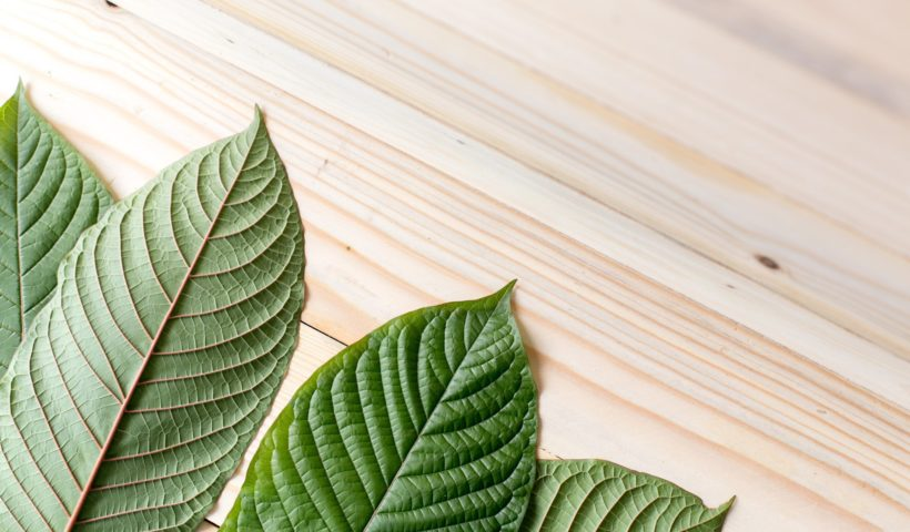 What You Need To Know About Kratom Tree?