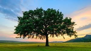 Best Trees For Shade