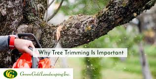 Why Tree Trimming is Important